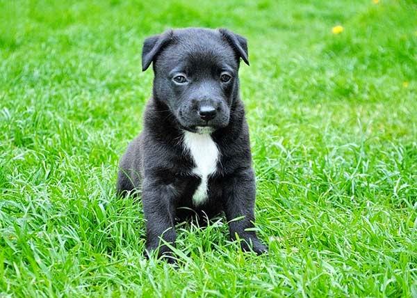 Esquema de Vacunación en Perros