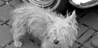 Cómo rescatar y rehabilitar a un perro callejero