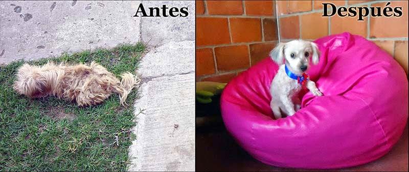 perro callejero rescatado