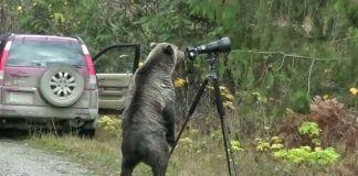 oso-curioso