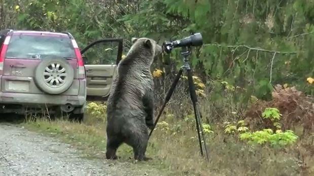 En video: el simpático oso fotógrafo de la vida salvaje