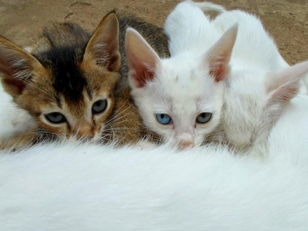 Cómo cuidar gatos recién nacidos con o sin madre