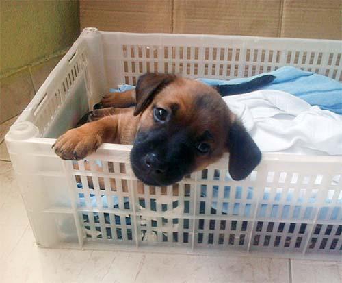 Cuidar cachorros recién nacidos