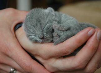 cuidar gatos recien nacidos