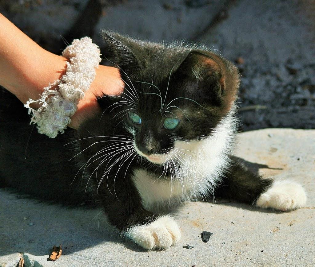 Acariciar a los gatos
