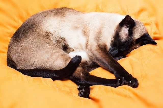 cama-gata-gato