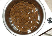 El alimento de perros es malo para los gatos