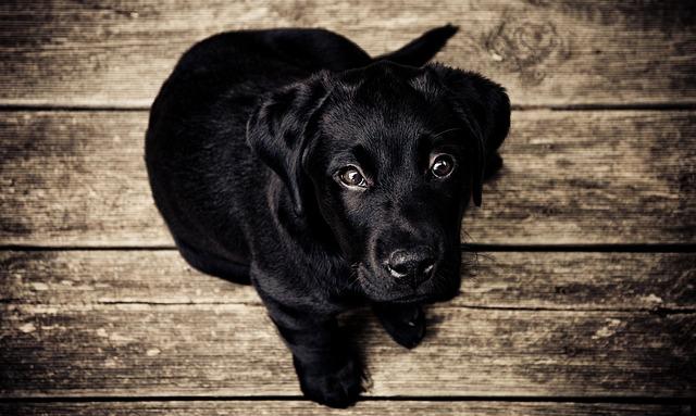 como-educar-a-tu-cachorro-notasdemascotas.com