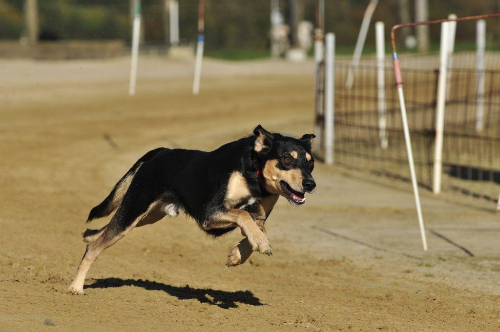 Ejercicio en la educación canina