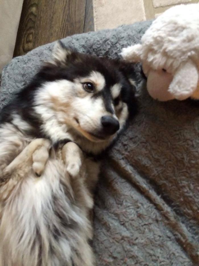 perros-patas-deformes-protesis-impresas-3d-2