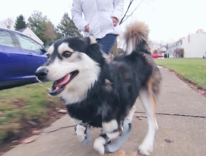 perros-patas-deformes-protesis-impresas-3d-7