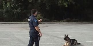 El-perro-policía-inteligente