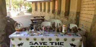 Niña de ocho años vende chocolates para salvar a los rinocerontes
