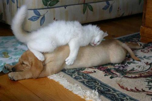 camas-para-gatos-1