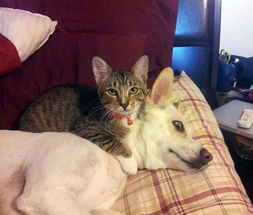 camas-para-gatos-10