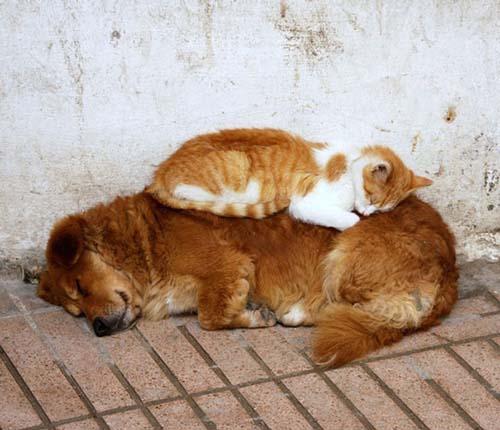 Las camas m s c modas para gatos humor - Camas para gatos ...