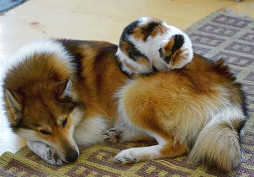 camas-para-gatos-13