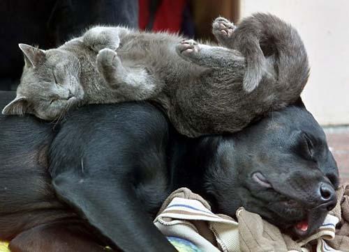 camas-para-gatos-2