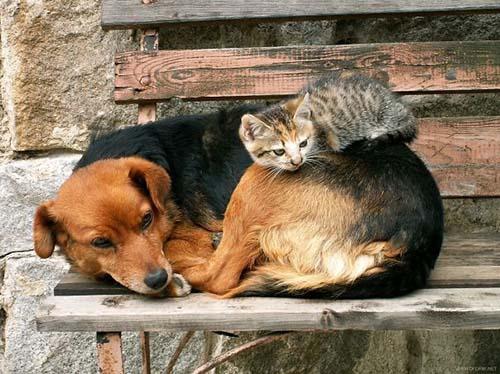 camas-para-gatos-3