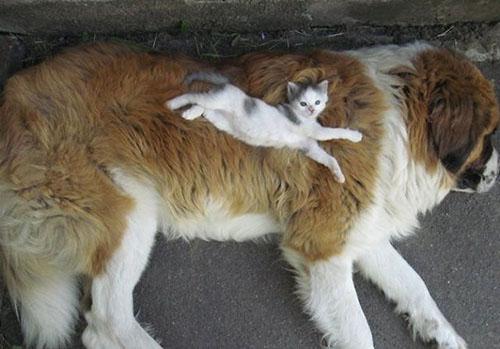 camas más cómodas para gatos