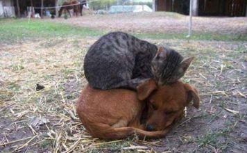 Las camas más cómodas para gatos - HUMOR