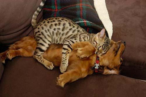 camas-para-gatos-6