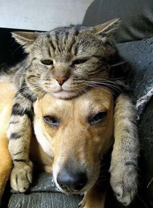 camas-para-gatos-7