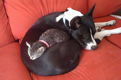 camas-para-gatos-8