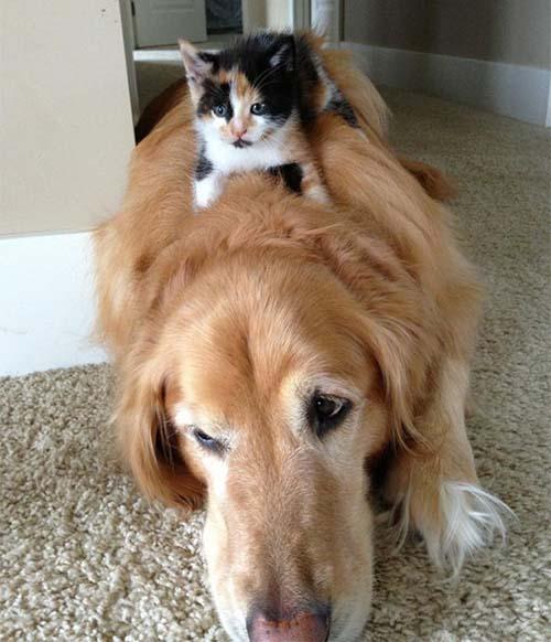 camas-para-gatos-9