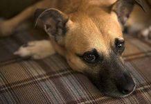 Diarrea en perros