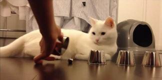 gato-juega-trilero