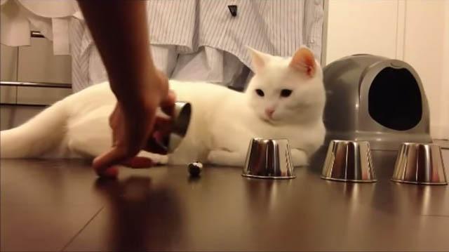 """El gato que juega """" dónde está la bolita """""""