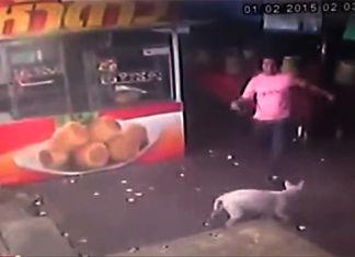 hombre recibe su merecido al intentar agredir a un perro indefenso