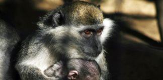 Condenados a morir en el peor zoológico del mundo
