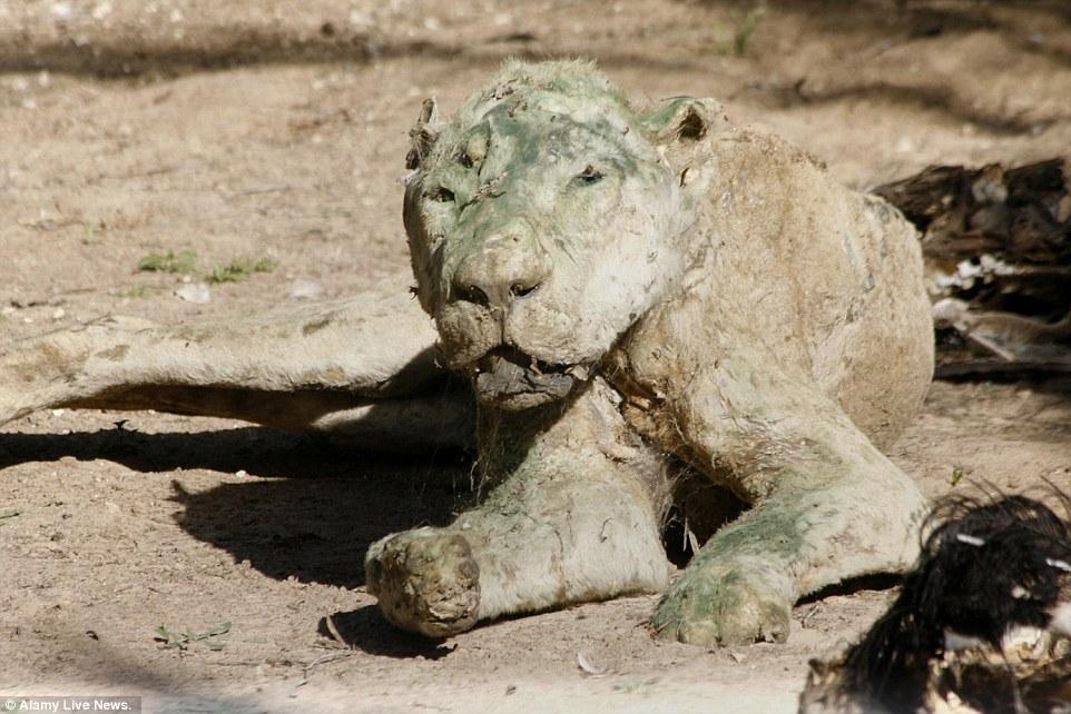 peor-zoo-del-mundo