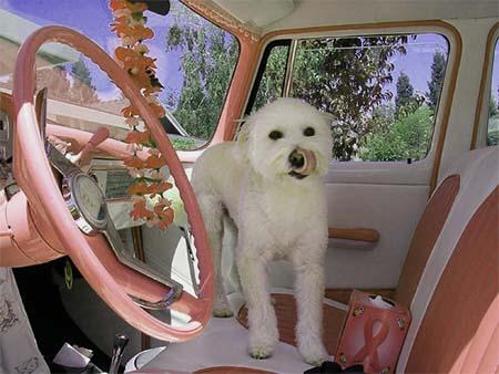 perro-automóvil