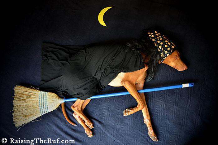 perro-brujo