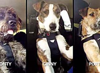 Perros que conducen por una buena causa