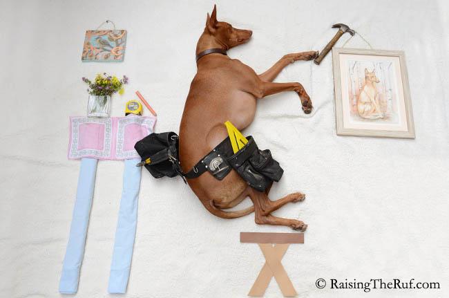perro-trabajando-ruf