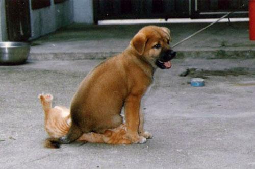 perros-malvados-3