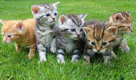Qué hacer cuando traes un gatito a casa