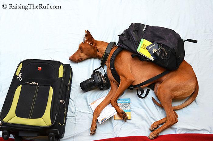 rufus-perro-viajando