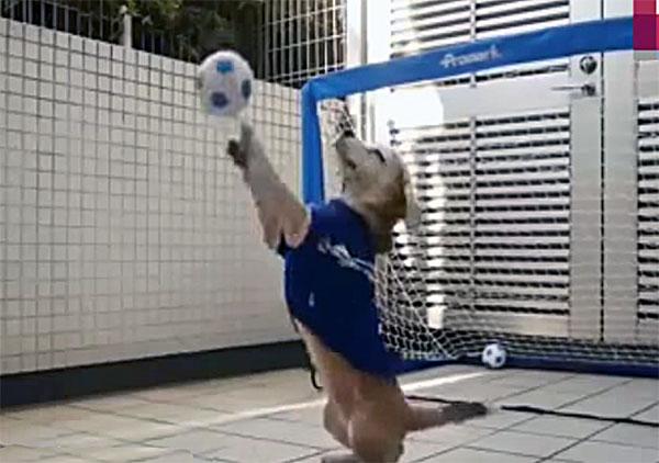 una-perra-con-una-sorprendente-habilidad