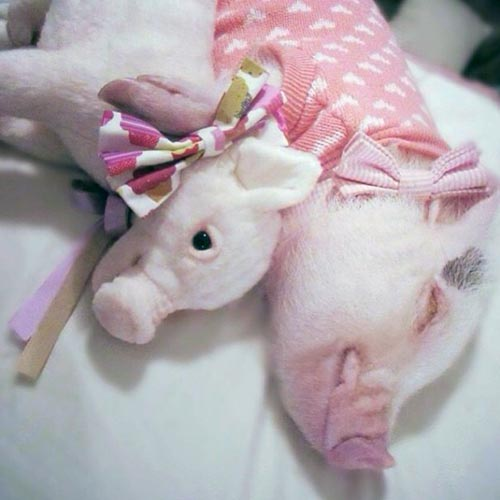 animales-con-peluches-10