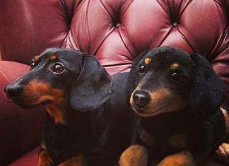 Divertidas fotos de animales con peluches idénticos a ellos