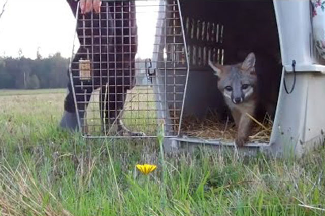 animales libres por primera vez