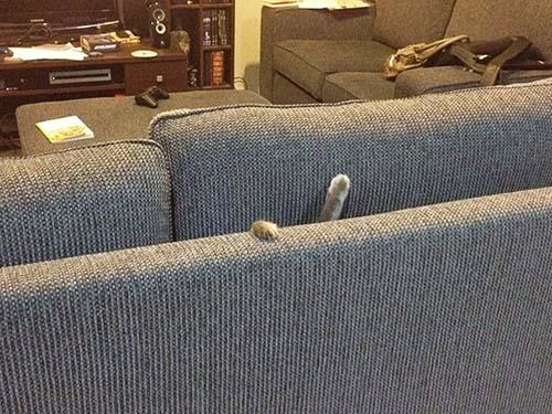 donde-está-el-gato-1