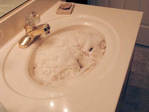donde-está-el-gato-13