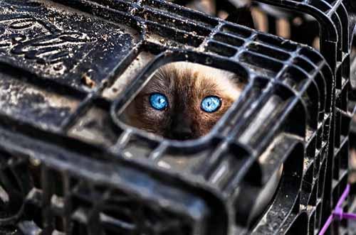 donde está el gato
