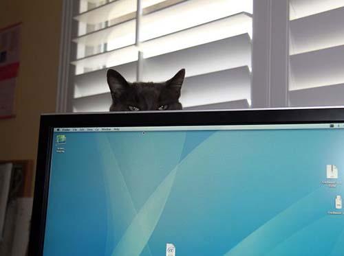 donde-está-el-gato-15